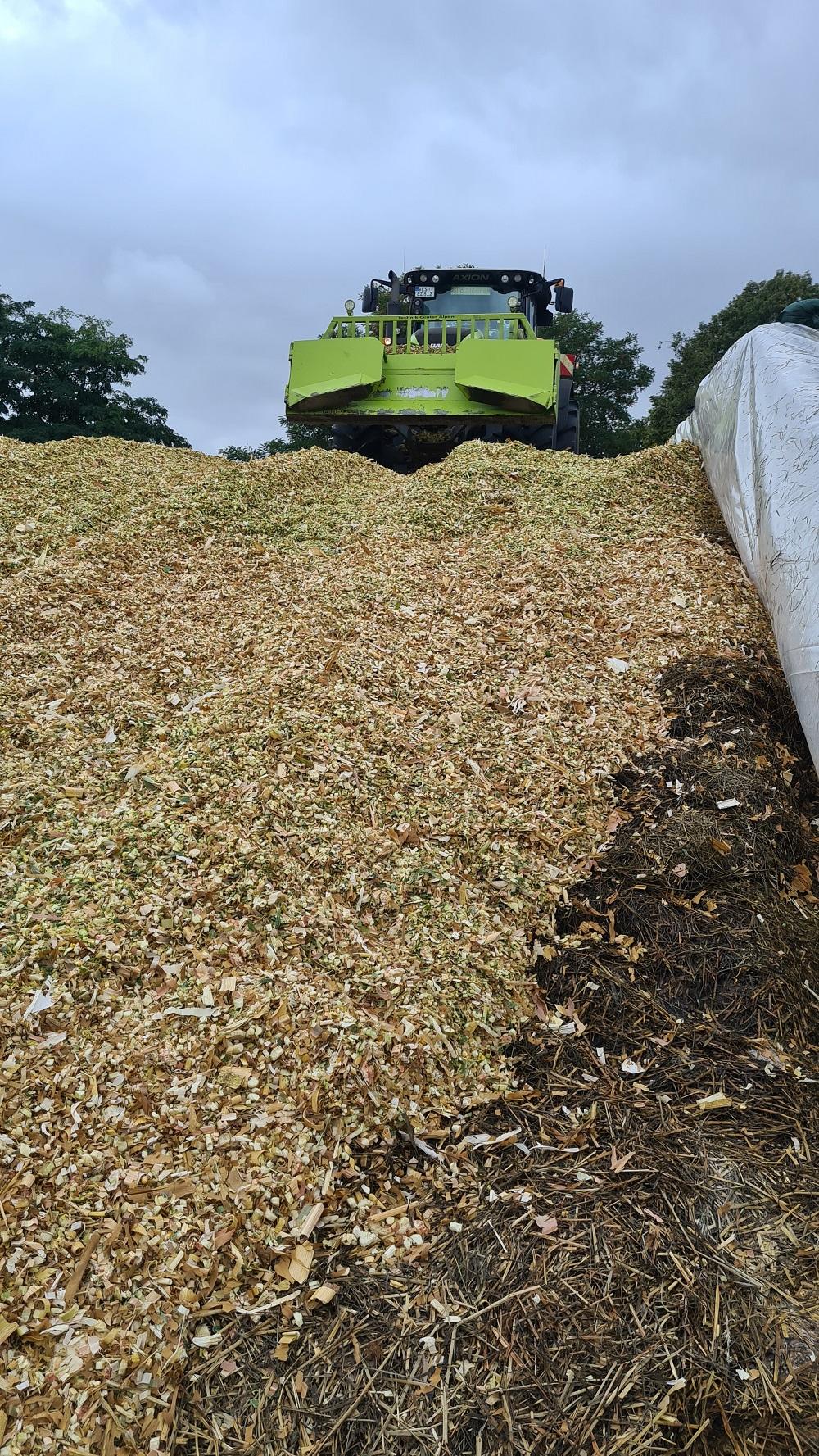 Mais über Gras silieren