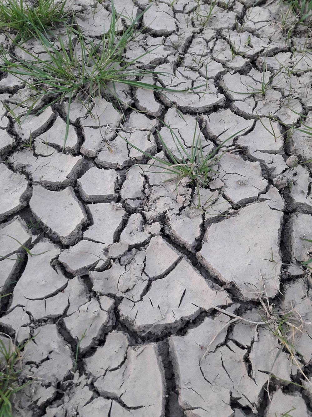 Weide im April 2019