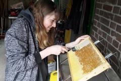 Honigernte Entdeckeln der Waben