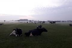 Kühe Morgens holen...schönste Zeit