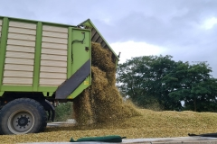 Silierwagen Mais entladen