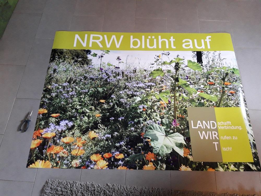 unser Plakat zur Blühmischung